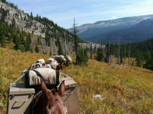 Mule packing into the Bob Marshall Wilderness
